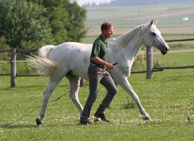 Harmonie Equus Beziehungstraining