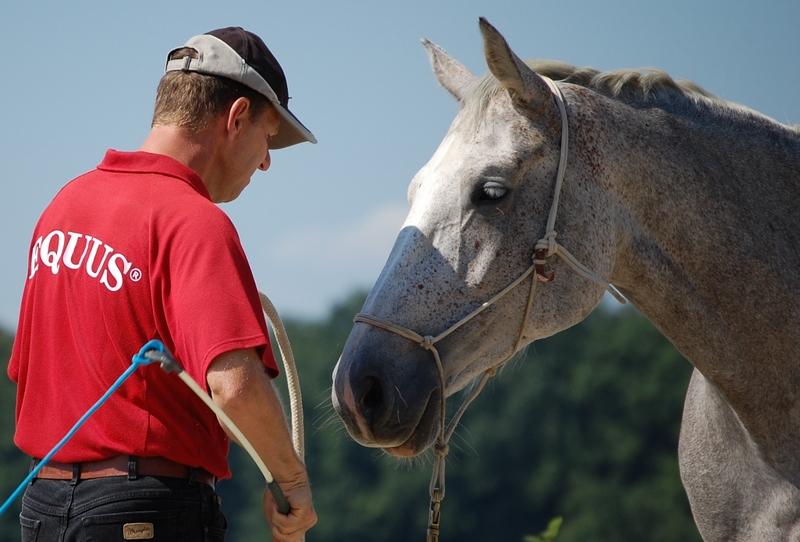 Pferde verstehen Beziehungstraining