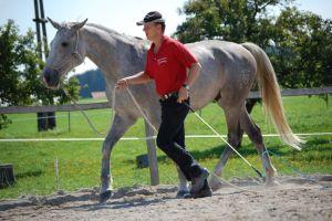 Beziehungstraining Equus Aufmerksamkeit