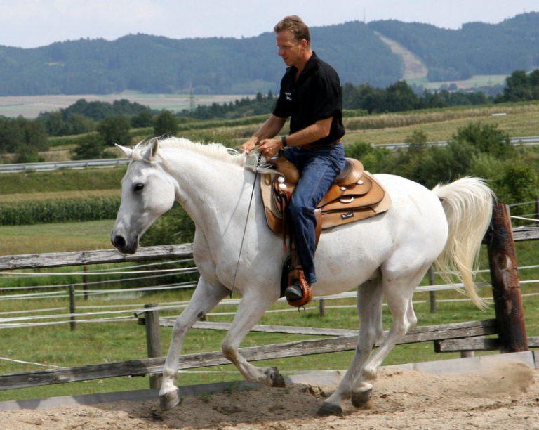 Reiten Equus Beziehungstraining