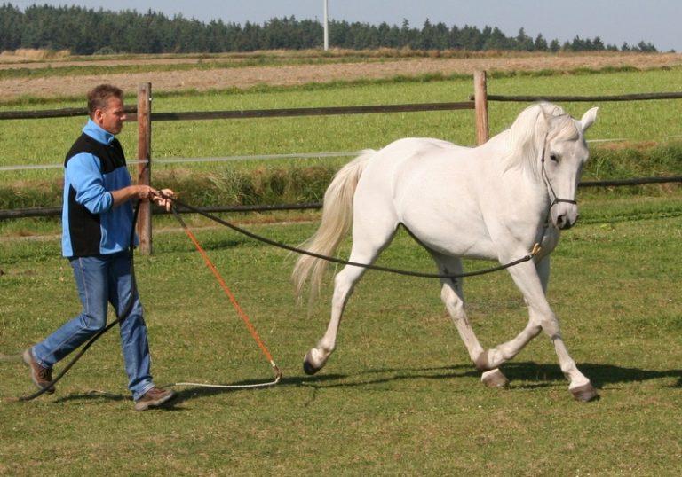 Zirkeln Beziehungstraining Equus