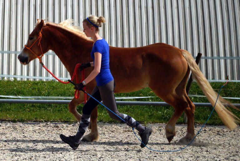 Führen im Equus Beziehungstraining